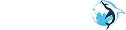 Барракуда — Таможенное оформление
